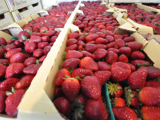 With dozens of bands, carnival rides and 800 pounds of ripe strawberries, the 2017 Strawberry & Music Festival returns this weekend at 8200 Immokalee Road.