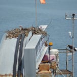 A pair of osprey have nested at the Delaware River and ay Authority Lewes Ferry Terminal for three years. Now, a new webcam, lets people monitor the birds at the nest.