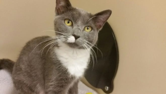 Are  you looking for Arya? She's waiting at the Humane Society of St. Lucie County.