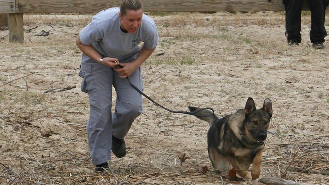 Xen participates in training with his handler, Deputy 1st Class Christine Kirkpatrick.