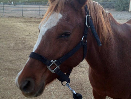 Triple R Horse Rescue in Cave Creek is looking for