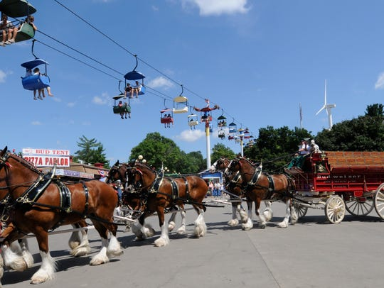 Clydesdales at the Iowa State Fair.