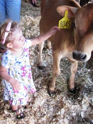 You can make new friends at the Chemung County Fair in Horseheads — and ride the midway, hear music and more. Here, Emelia Heldt meets a calf in 2015.