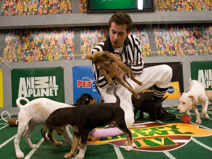 A referee gets into the action of Puppy Bowl IV on Oct. 17, 2007.