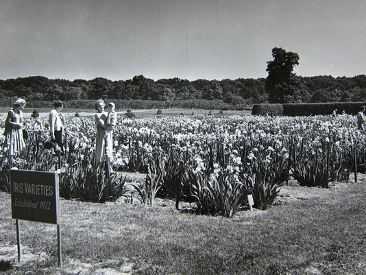 Chrysanthemum Field Day October 22, 1939,.jpg