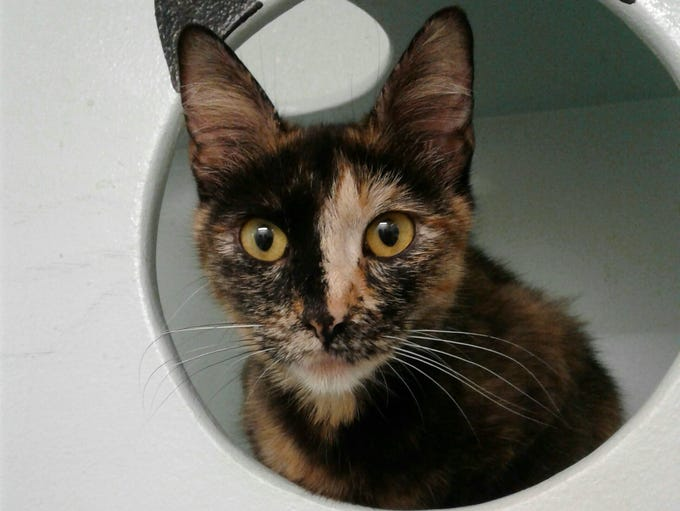Haylee is 1-year-old girl who has been in foster care.
