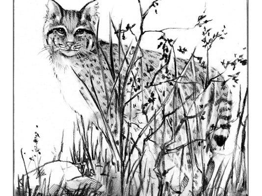 TOS_bobcat_hiding