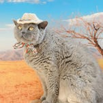 "This Cowboy Hat is featured in the book, ""Cats in Hats,"" published by Running Press."