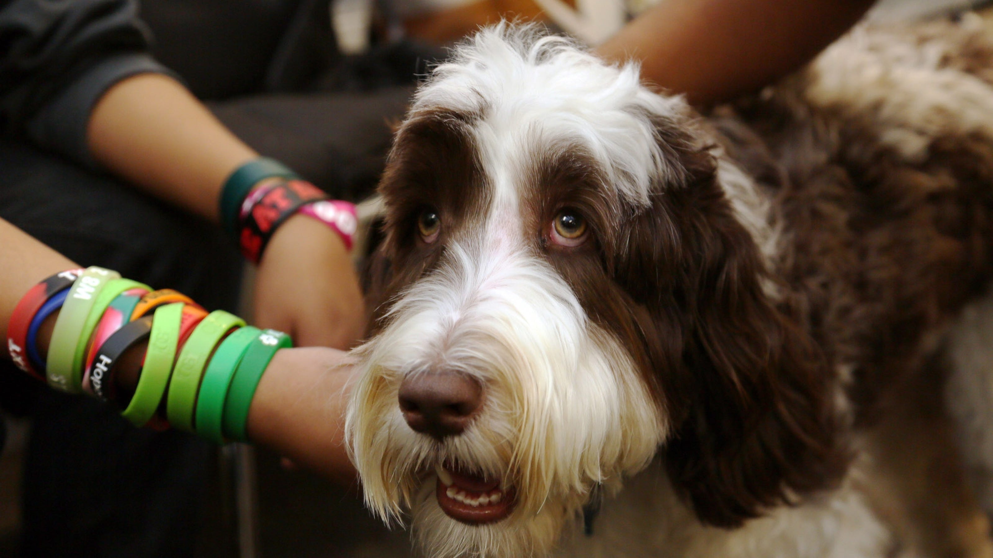 Therapy dogs help calm people under stress