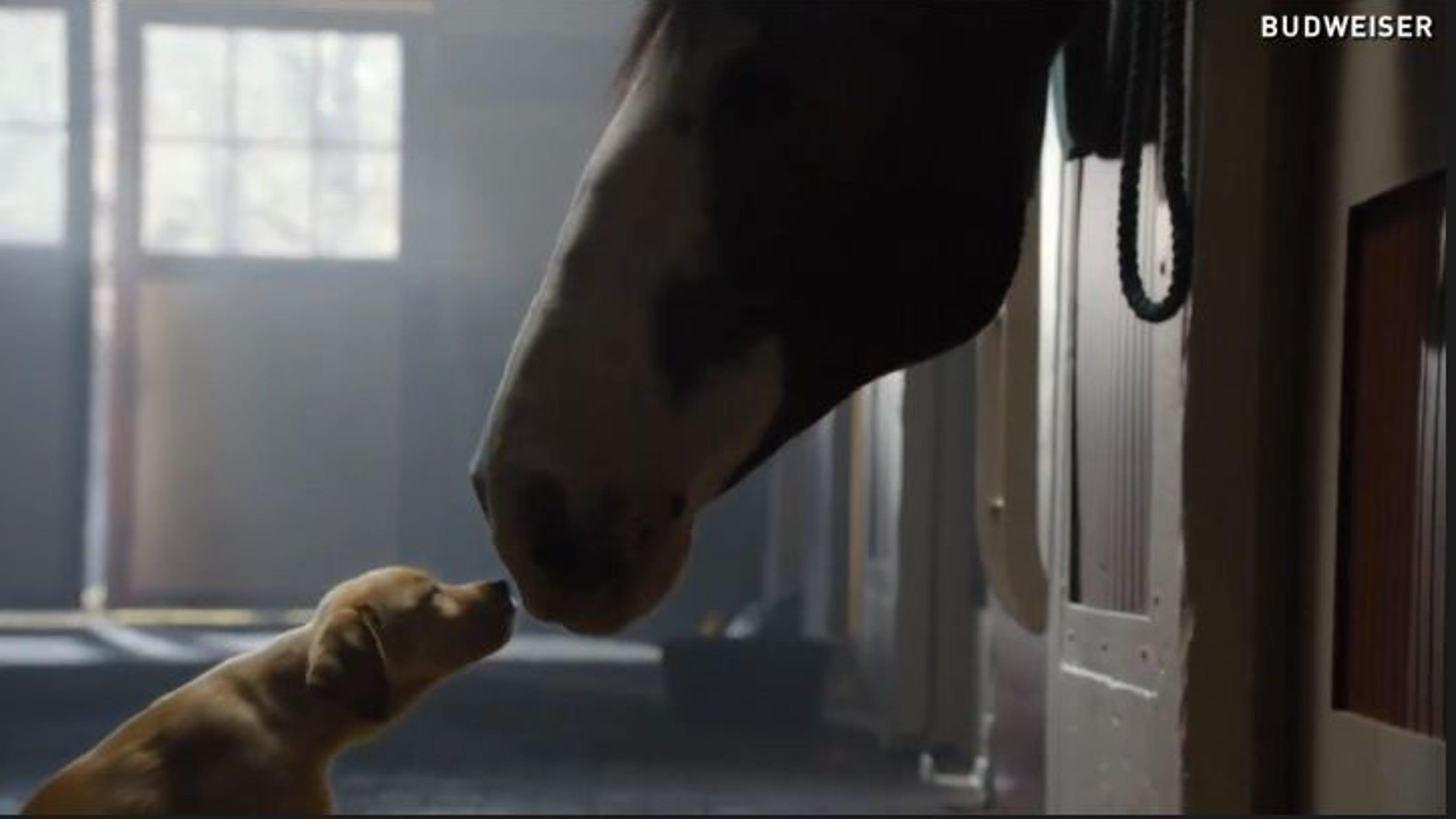 """Budweiser, """"Puppy Love"""""""