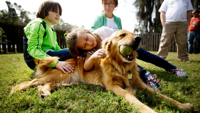 Sky, the golden retriever who was saved from a South Korean meat farm, was adopted to the Ames family of Valrico. Getting to know her is Brinley Ames, 6, her brother, Brodie, 11, and mother, Robin. Sky will be trained to be a therapy dog for children on the autism spectrum.