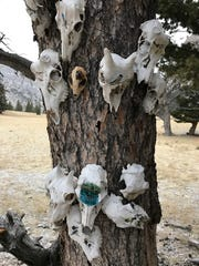 The Artists' Tree in Wagner Basin is covered in painted animal skulls fixed to the trunk by barbed wire.