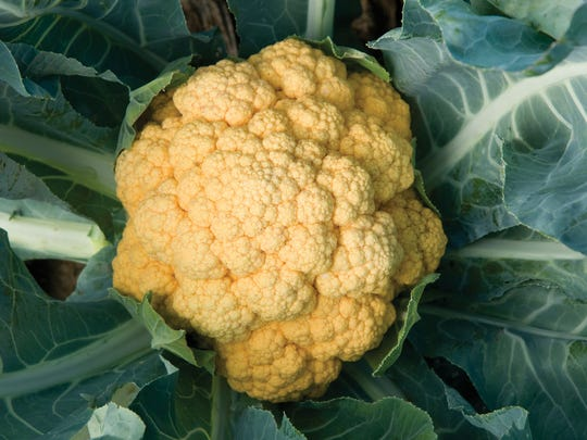 Colorful Cauliflower and Broccoli.  This year we have