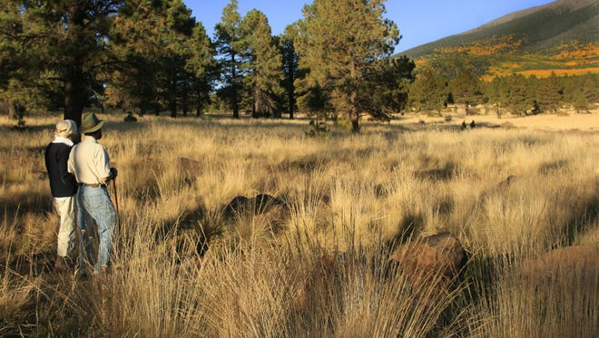 Hart Prairie north of Flagstaff is a popular part of Coconino National Forest. A new map shows where you can drive in the forest, plus trails for hiking, biking and more.