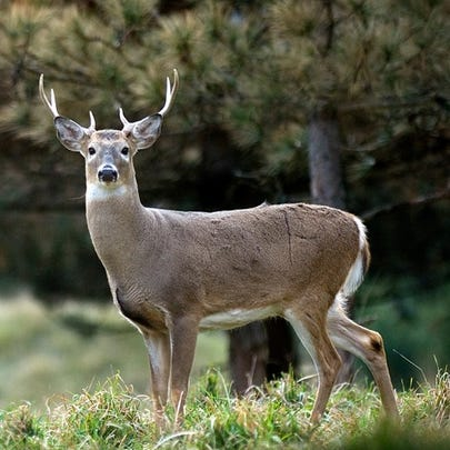 The state is telling people not to eat venison from