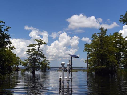 A blue-green algae bloom in Blue Cypress Lake in western