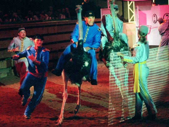 Ostriches dash out of a cage during a 1997 show at