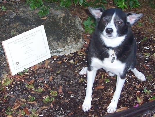 0816-YNIR-ask-dog-tr-riotricks-002.jpg