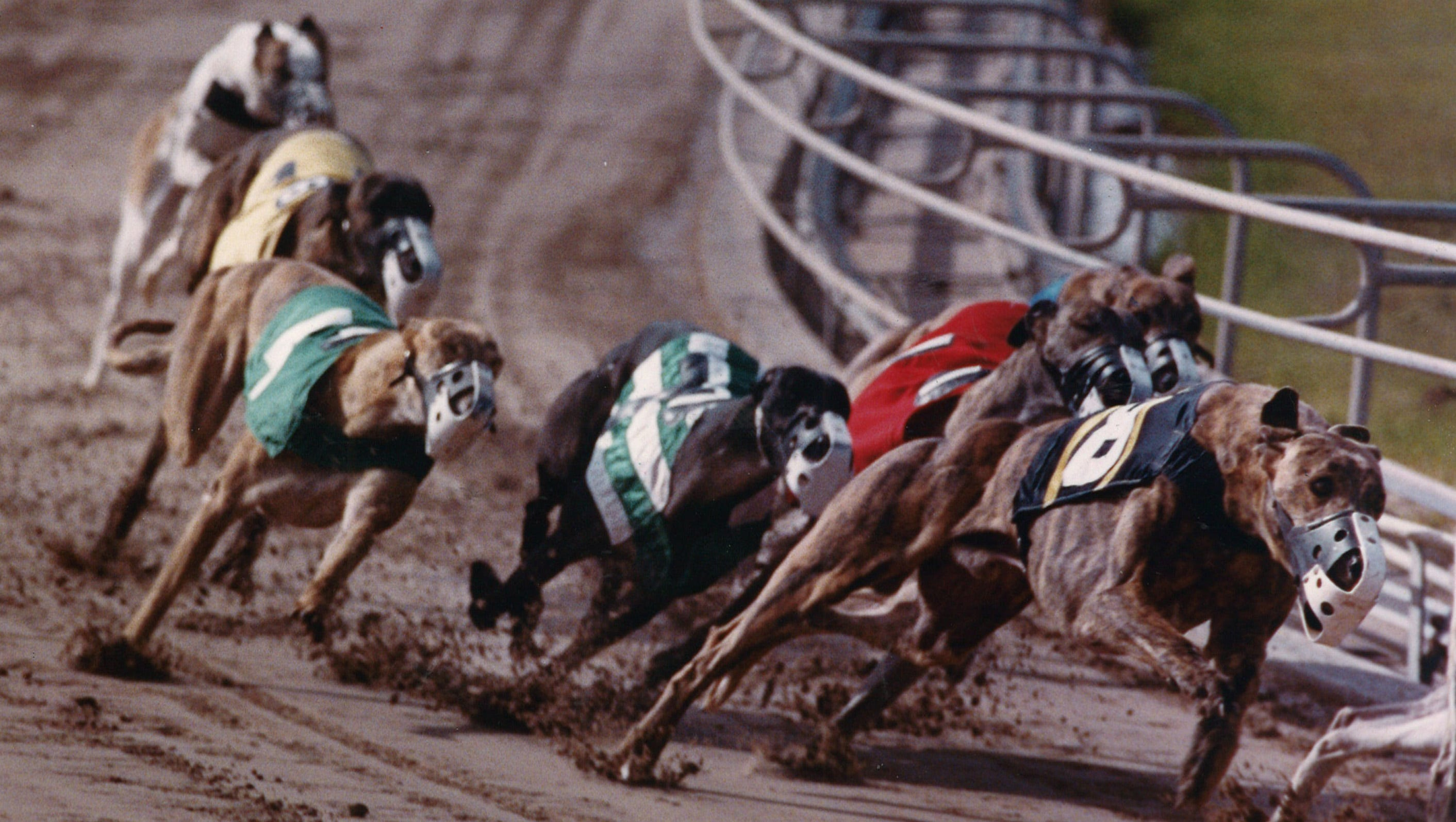 Greyhound racing betting rules in texas boylesports mobile betting sports
