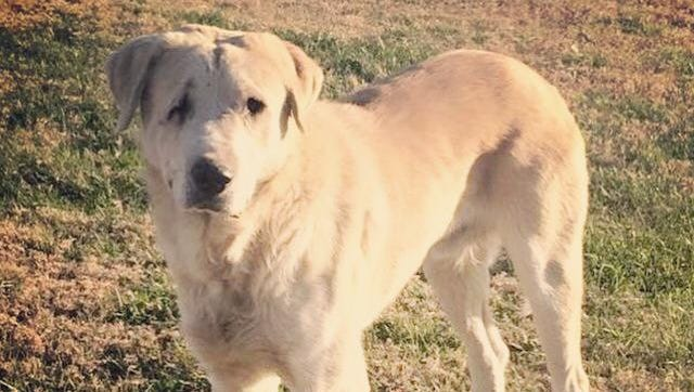Speedy roamed around East Nashville for months before a group of volunteers caught him.