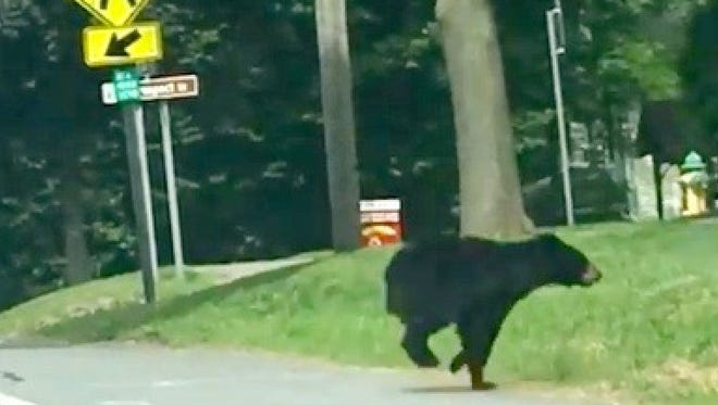 A screenshot from the Facebook video of the bear crossing Route 20A in Geneseo.