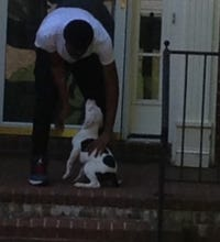 Man stabs stepfather to death over puppy