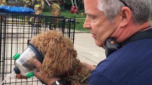 Dogs survive McLean house fire