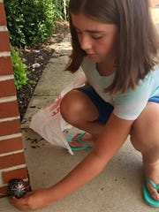 Violet Young, 9, places a rock at Chambersburg Brethren in Christ Church the afternoon of July 24. Locals in the county are painting rocks and then placing them in different areas for people to find.