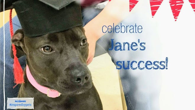 Jane's graduation picture from obedience school.