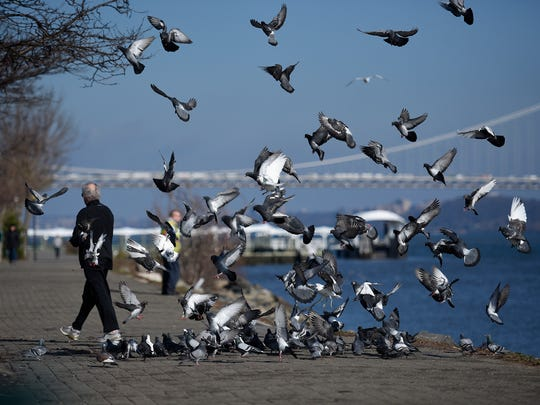 A man feeds birds along the Hudson River walkway during an unseasonably warm afternoon in Edgewater, NJ on Tuesday, December 27, 2016.