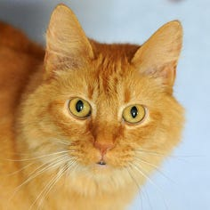 Pet of the Week: Boots