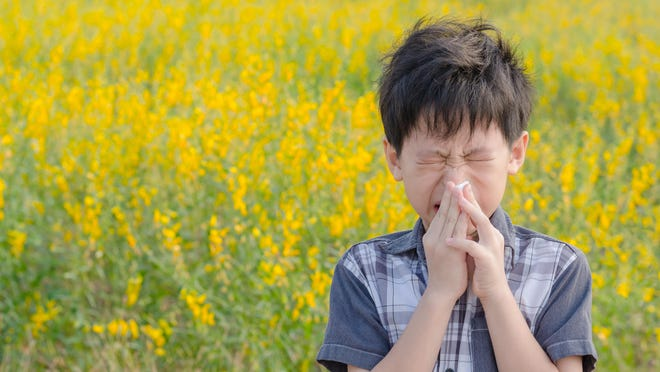 Here's why all that sneezing and scratching is happening
