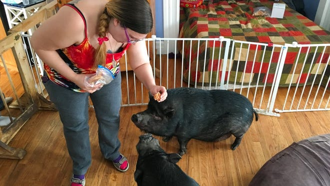 Ypsilanti residents Stephanie Rowland, 38, feeds a snack to one of her four miniature potbellies pigs. Rowland and her husband Jeffery, 42, are going to court with Ypsilanti city officials in an effort to prove they fall under the Fair Housing Act and need their four miniature potbellied pigs for medical assistance.