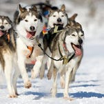 Sled dog races in Doty set
