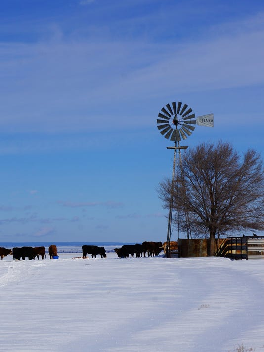 Snow-Windmill-Cattle-1.16.jpg