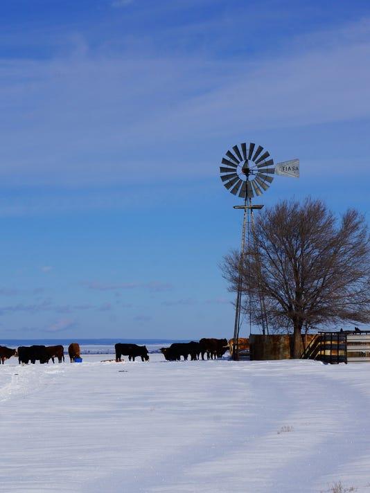 Snow-Windmill-Cattle-1.16.jpg