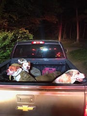 Dogs wait in a truck bed following a fire at Mountainside