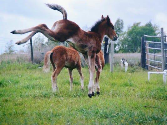-KnH-Rescued-Foals.jpg