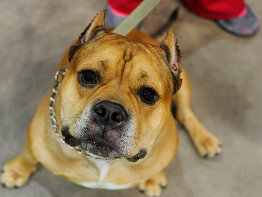 During the Phoenix Pet Expo, pet owners can spend quality
