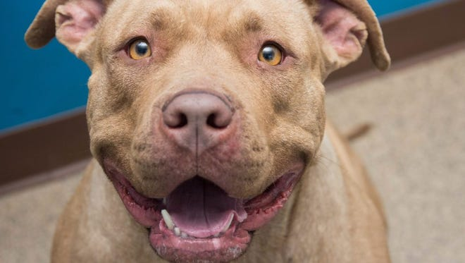 """The Humane Society of the Tennessee Valley will host its annual """"Dirty Dogs Done Dirt Cheap"""" vaccine clinic and dog washing event 8 a.m. to 12:30 p.m. Saturday."""