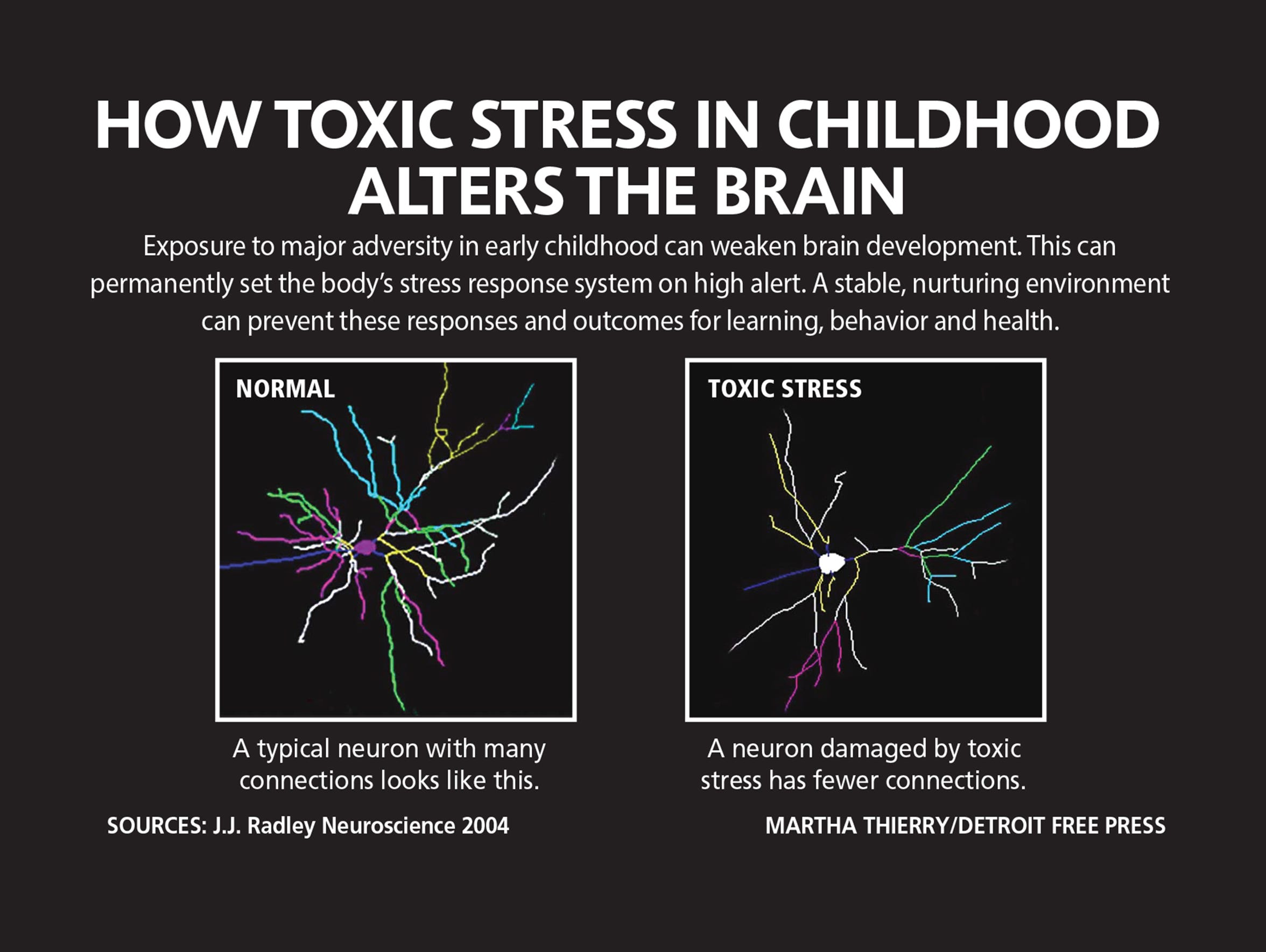 How toxic stress in childhood alters the brain