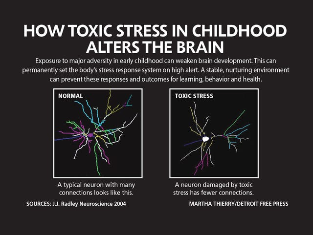Social Stress Brain Circuitry Fails To >> Toxic Stress Of Poverty Violence Pain Alter Kids Brains