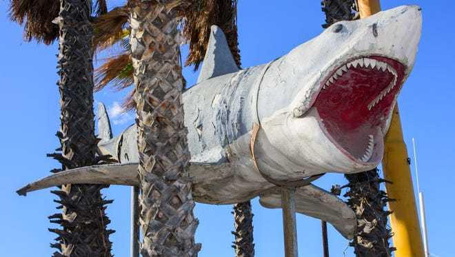 """The sole surviving full-scale model of the 1975 """"Jaws"""" shark put teeth into the Academy Museum"""