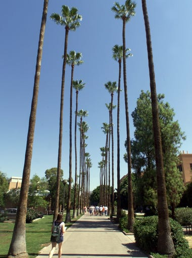Mexican fan palms line Palm Walk at Arizona State University