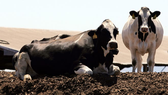 Dairy cow manure is among the targets of new California regulations to restrict greenhouse-gas pollution.
