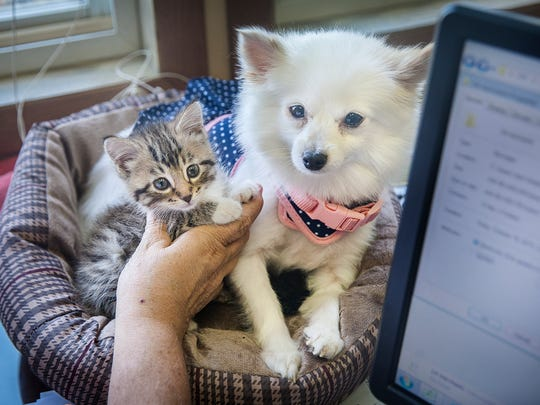 ARF director Vickie Bevans places her new kitten Emma
