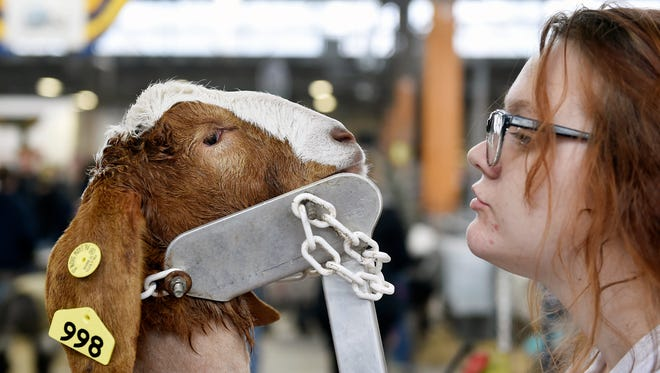 Brittyne White, 17 of Jersey Shore, engages in a staring contest with Gadget the goat at the 101st Pennsylvania Farm Show Saturday, Jan. 7, 2017. The farm show, which serves as Pennsylvania's state fair, runs through Jan. 14 and features rodeo events, livestock auctions and various agriculture-themed competitions such as the popular sheep-to-shawl contest.