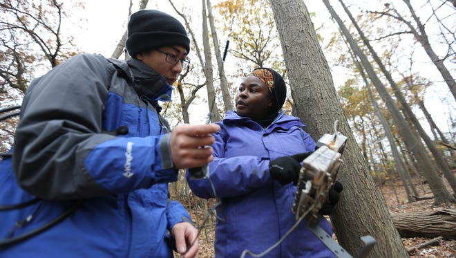 Asst. Professor Nyeema Harris sets up a trail camera with the help of prospective PHD student  Ke Zhang at Palmer Park in Detroit for her lab Applied Wildlife Ecology that monitors movements of possible carnivores in the area like racoon, canadian lynx, and bobcats, photographed on Friday, Nov. 17, 2017.