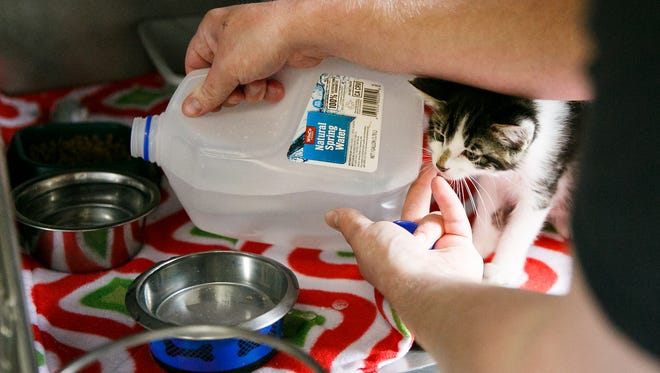 A kitten watches as Willamette Humane Society volunteer Greg Kirby fills a water bowl on Wednesday, May 30, 2018. The humane society is drawing water from an on-site well after the City of Salem's announcement that tap water is contaminated.