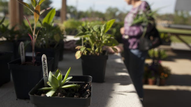 A shopper browses through plants for sale at Waynesboro Farmers Market on May 7.